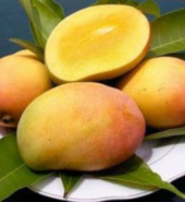 Kesari Mangoes (Box- 12 pieces)
